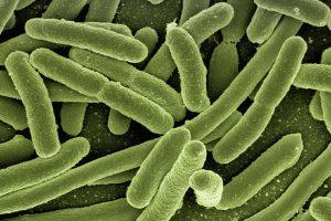 batteri-salute-renoxa